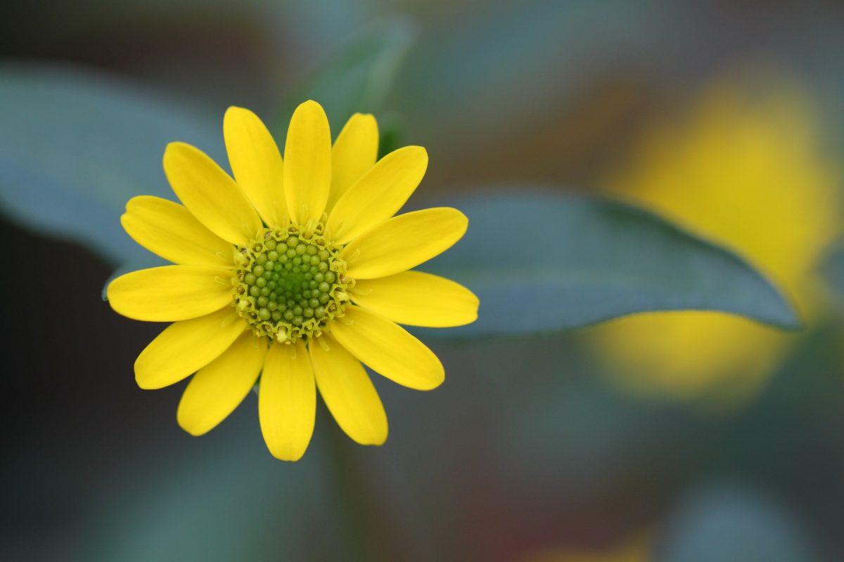 blossom-247409_1920